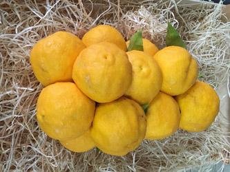 grappe-de-mandarine-roseraie-vessieres-06
