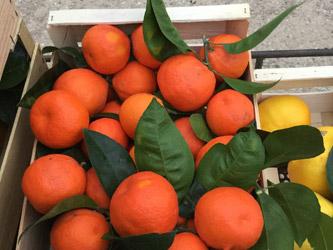 mandarines-roseraie-vessieres-08
